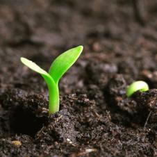 土壤修复技术