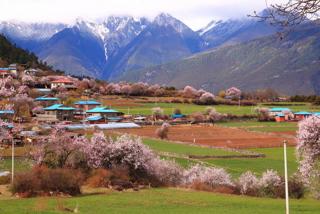 噶朗湖桃花