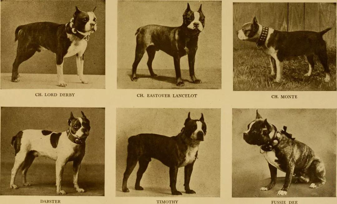 从一出生就带病,竟然是犬届的普遍现象