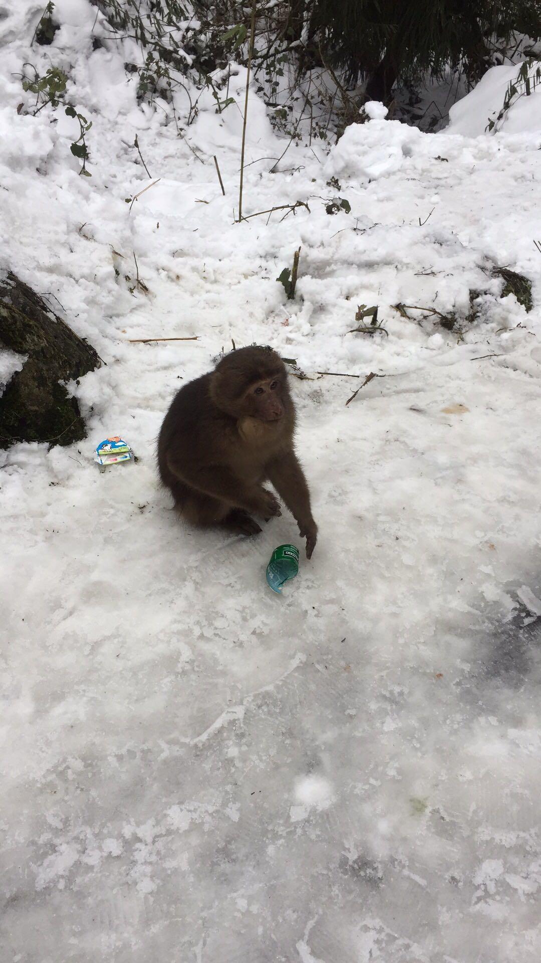龍池小猴子