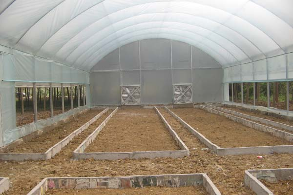 Single Span Film Greenhouse