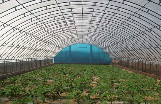 vegetable film greenhouse