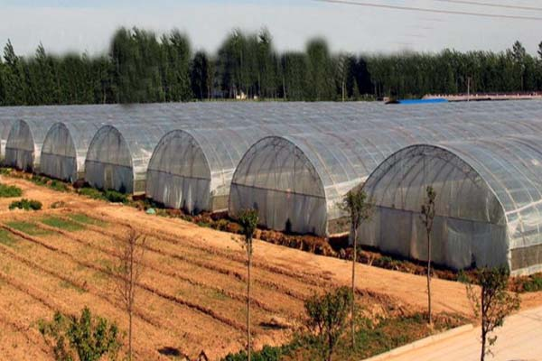 Commercial Film Greenhouse