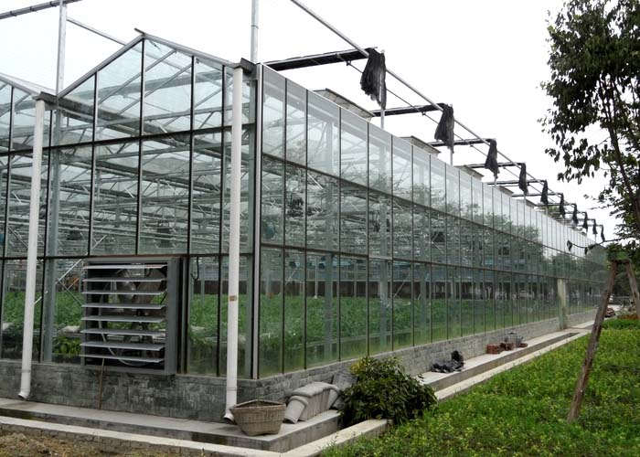 Commercial Glass Greenhouse(Side)
