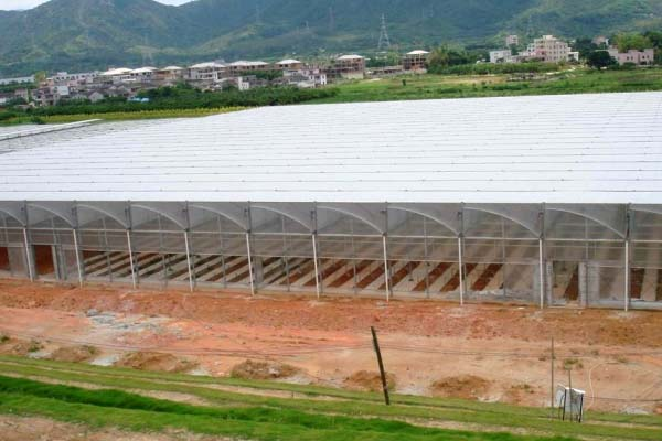 Plastic Film Sawtooth Greenhouse