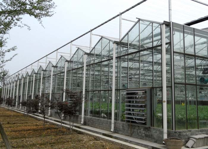 Commercial Glass Greenhouse