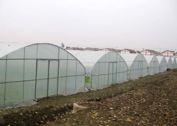 Multi-Span Film Greenhouse
