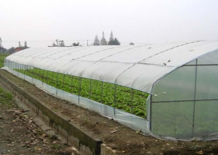 Plastic Tunnel Vegetable Greenhouse