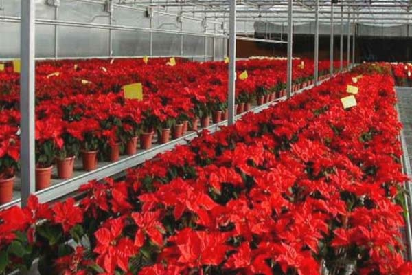 flowers greenhouse