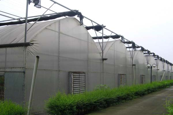 Agricultural Multi-Span Film Greenhouse