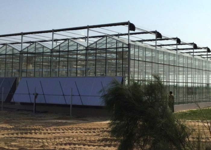 Hot Sale Glass Greenhouse