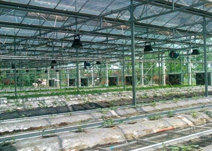 Commercial Glass Greenhouse(inside)